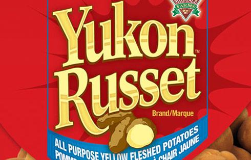 Yukon Russet